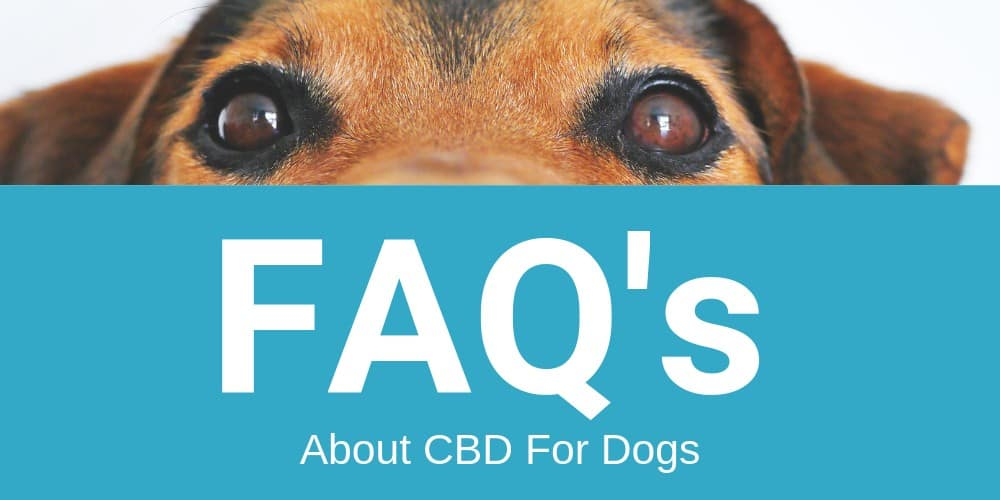 FAQ's about cbd for dogs
