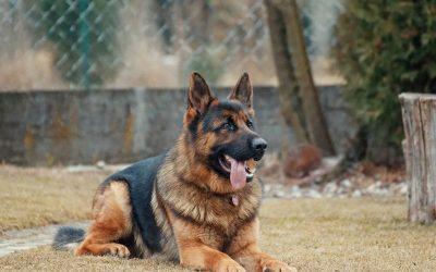 cbd hemp oil for dogs