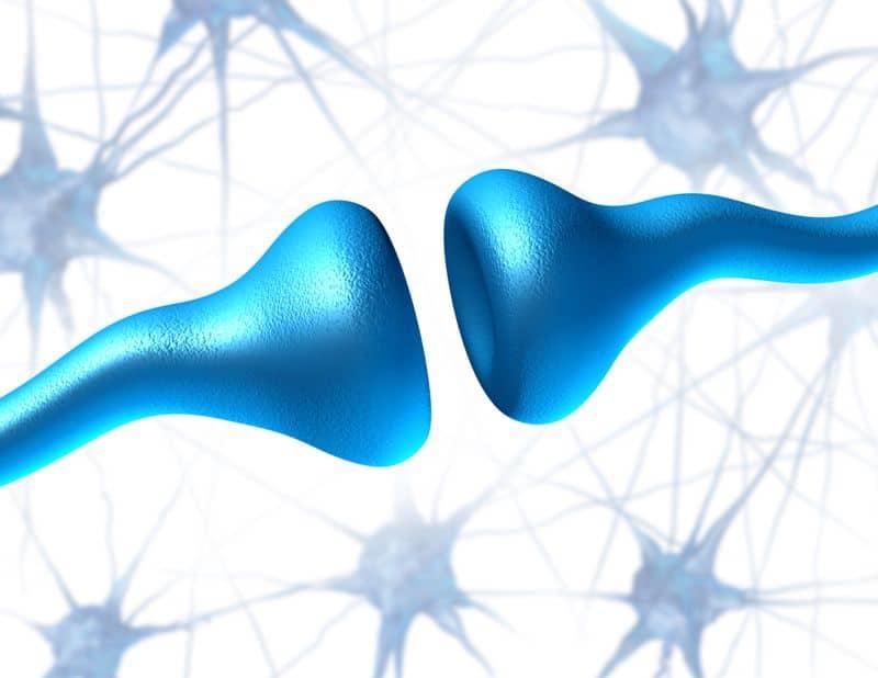 cbd receptors in your brain