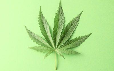 hemp vs marijuana - cannabis leaf